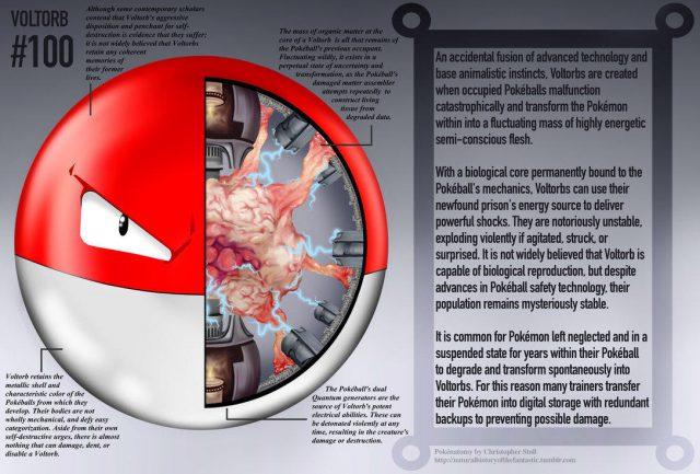 Voltorb-anatomie-640x433